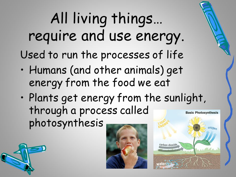 All living things… require and use energy.