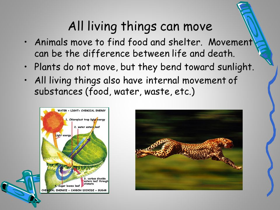 All living things can move