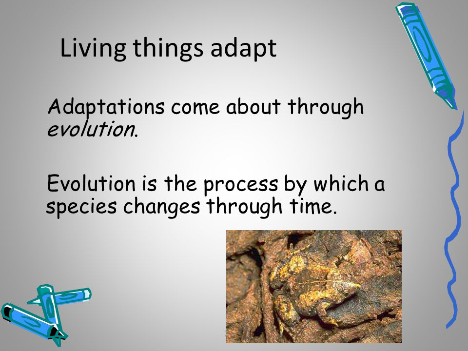 Living things adapt Adaptations come about through evolution.