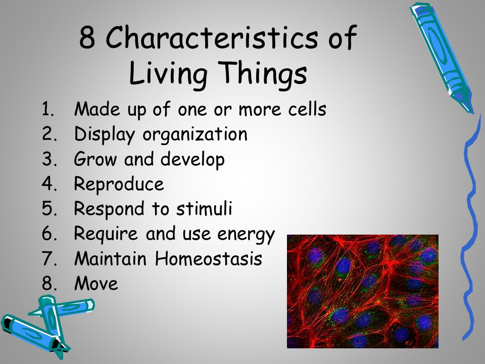 What are the characteristics of living organisms?