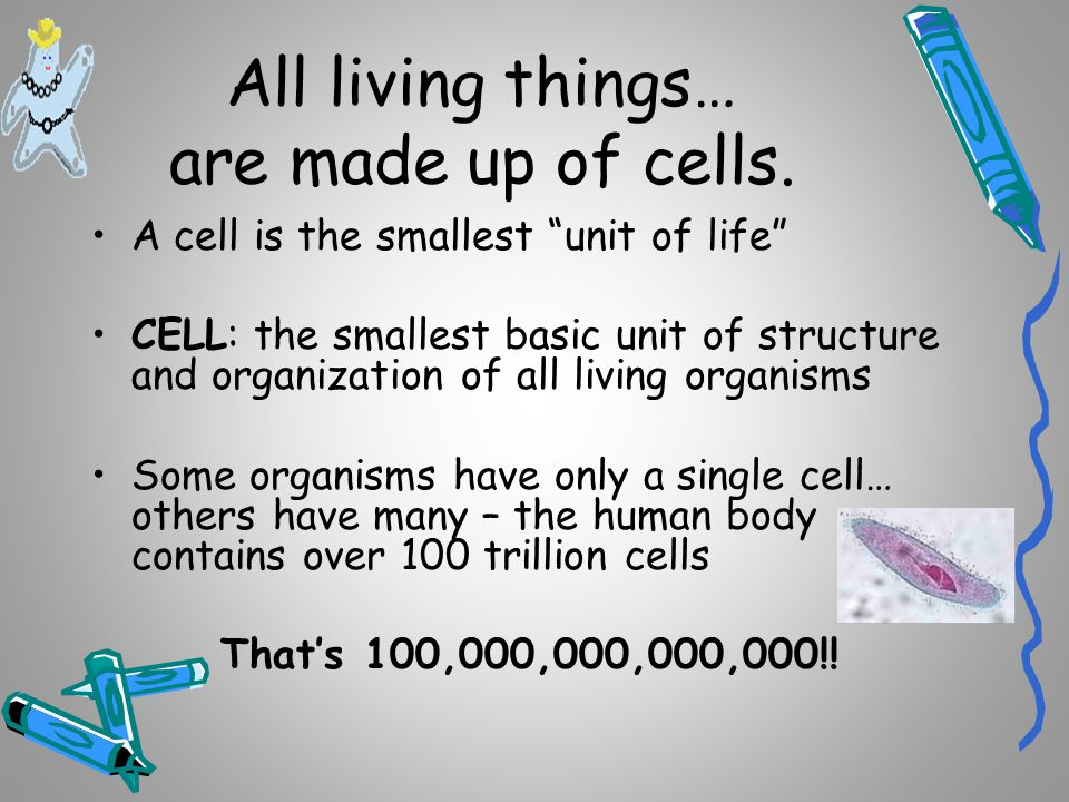 All living things… are made up of cells.