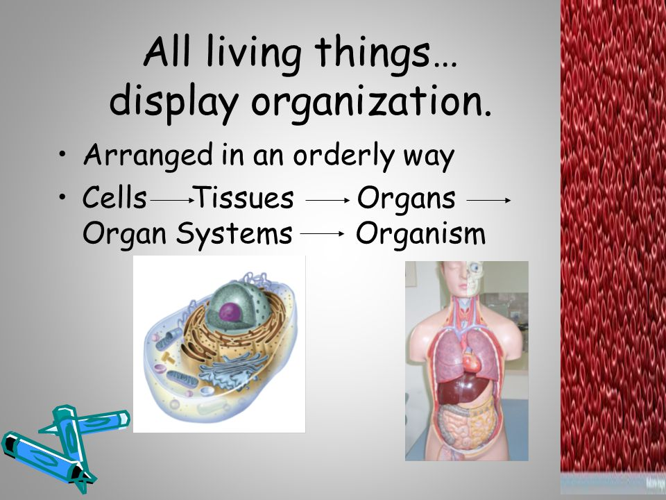 All living things… display organization.