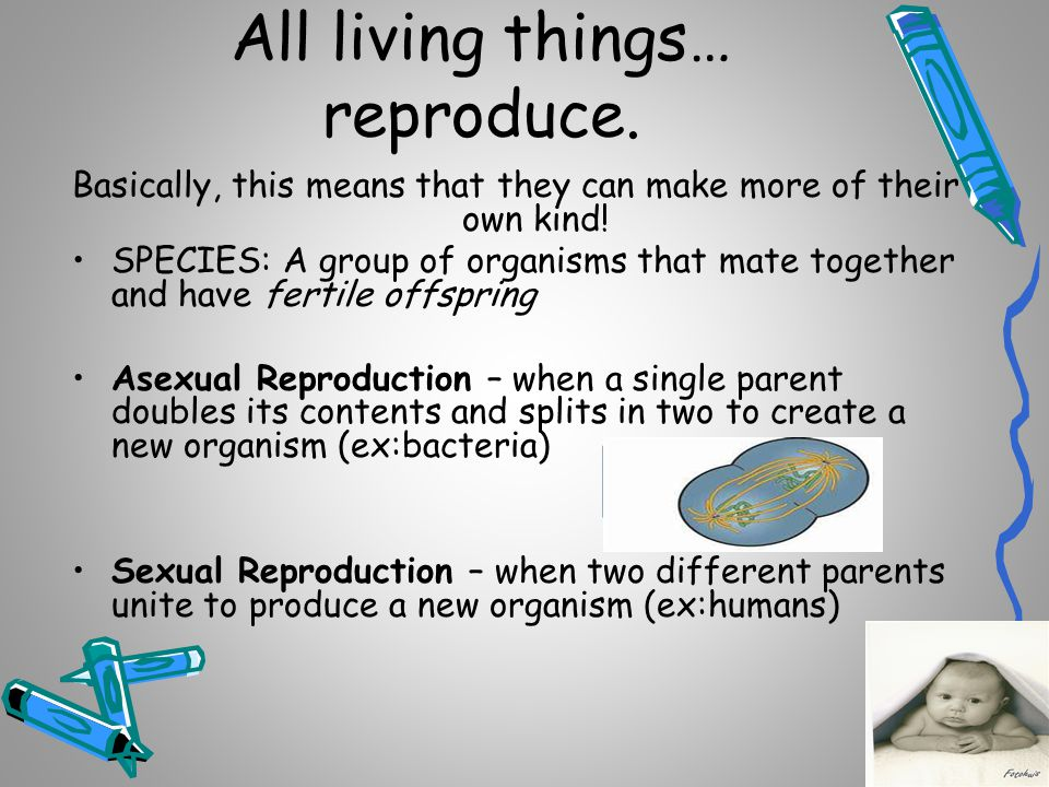 All living things… reproduce.