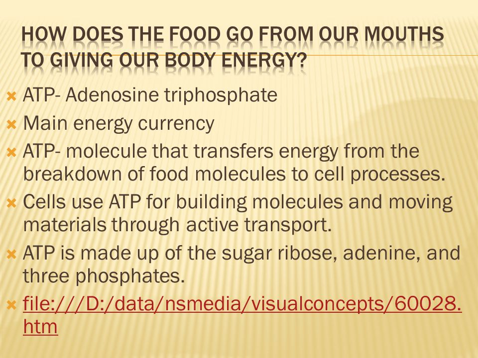 How does the food go from our mouths to giving our body energy