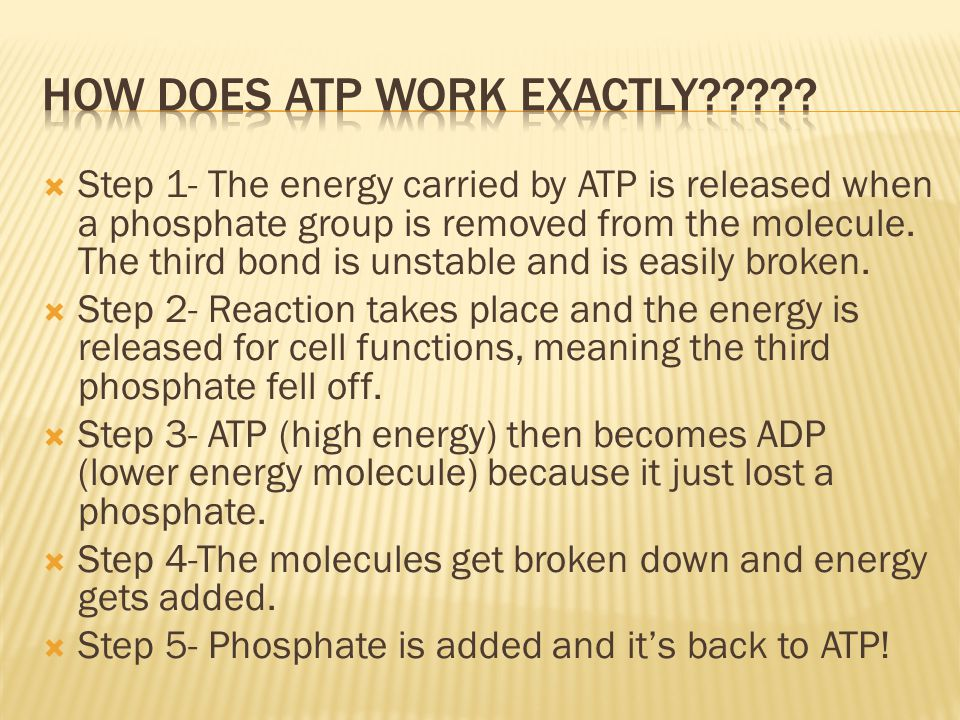 How does ATP work Exactly