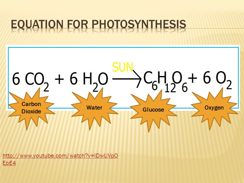 Equation for photosynthesis