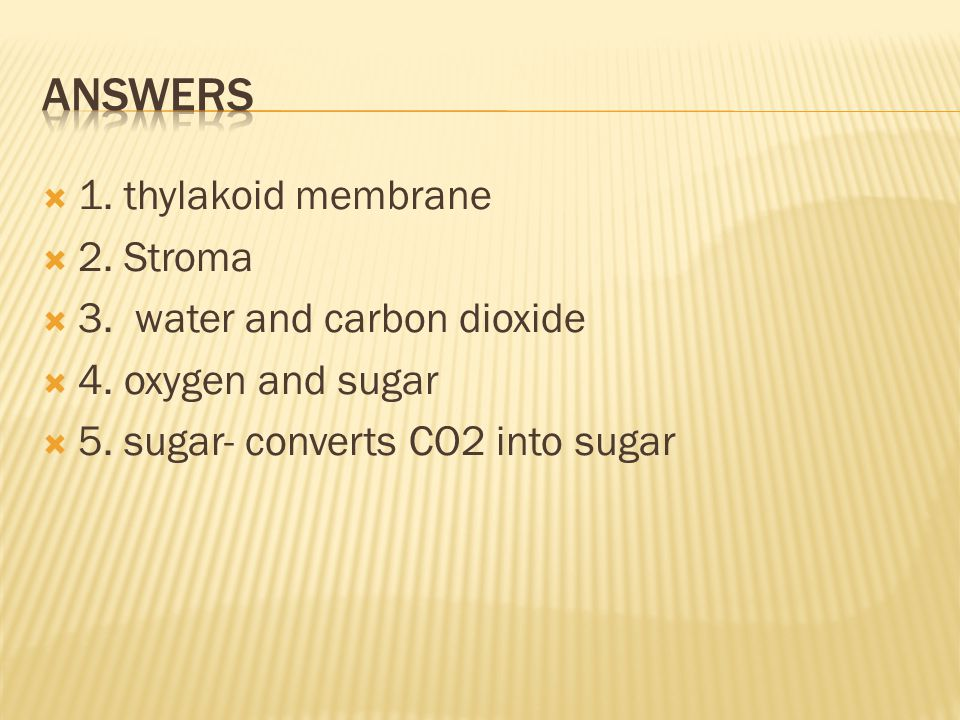 Answers 1. thylakoid membrane 2. Stroma 3. water and carbon dioxide