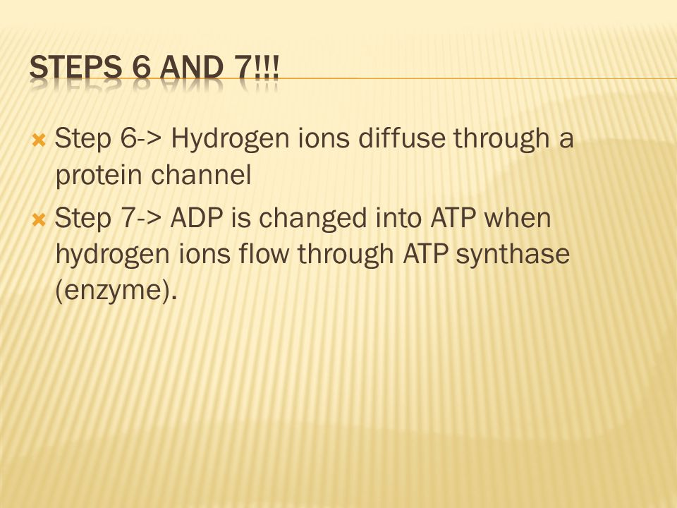 Steps 6 and 7!!! Step 6-> Hydrogen ions diffuse through a protein channel.