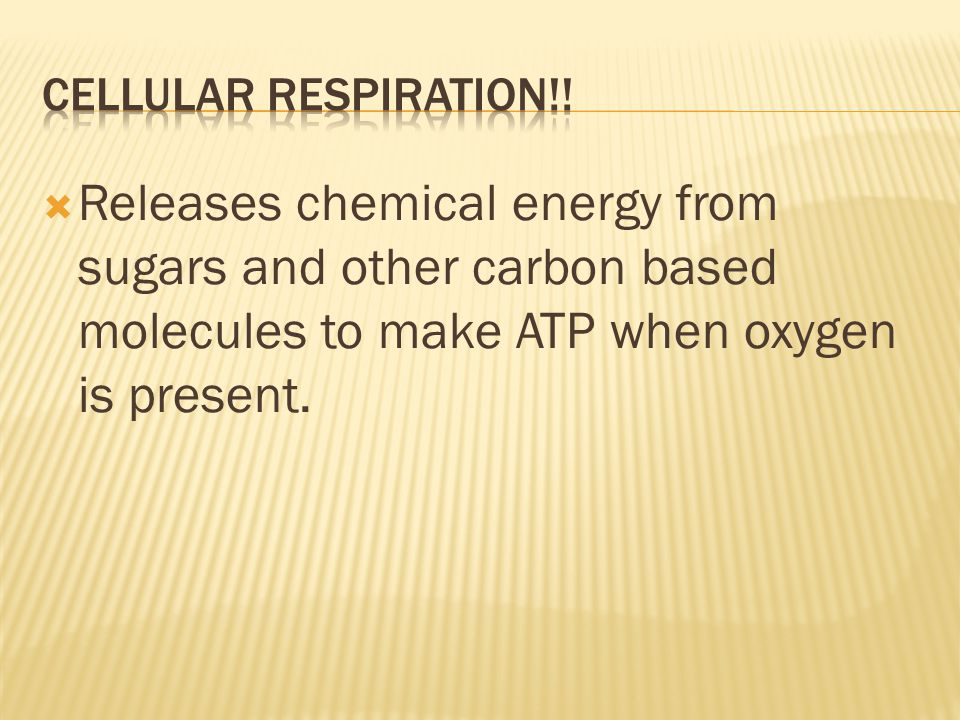 Cellular Respiration!.