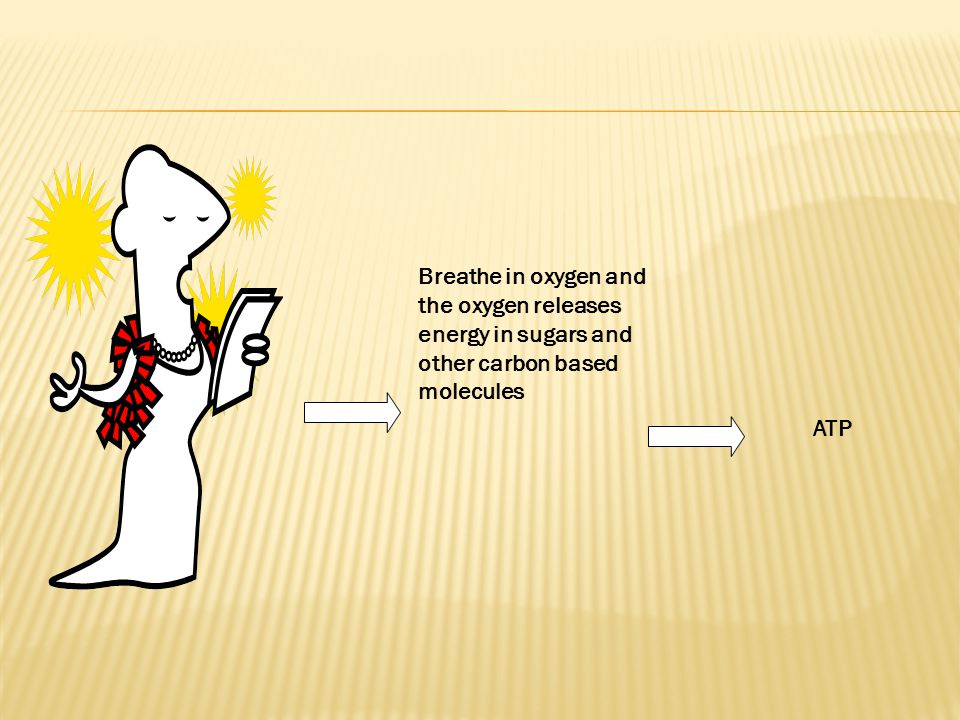 Breathe in oxygen and the oxygen releases energy in sugars and other carbon based molecules