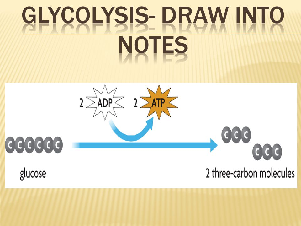 Glycolysis- Draw into notes