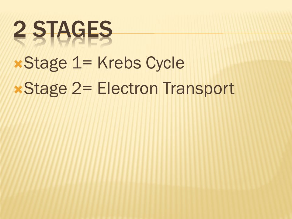 2 Stages Stage 1= Krebs Cycle Stage 2= Electron Transport