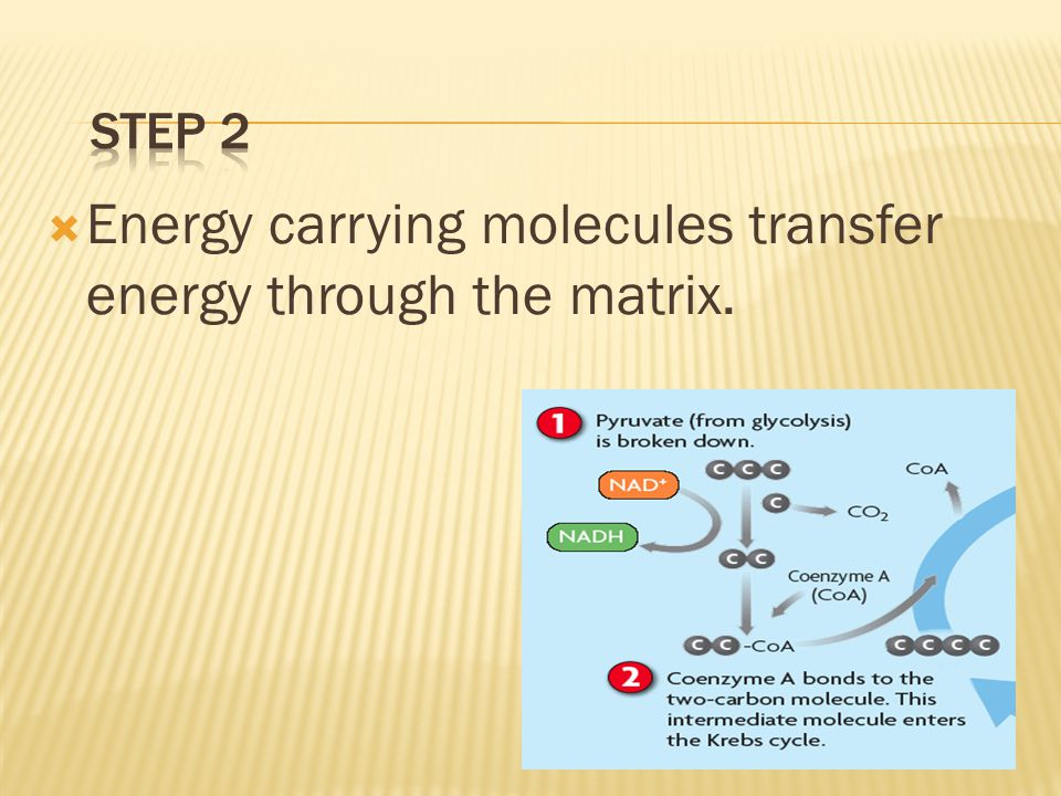 Energy carrying molecules transfer energy through the matrix.