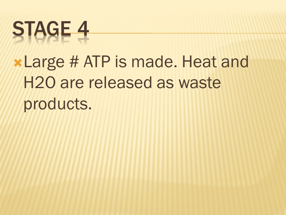 Stage 4 Large # ATP is made. Heat and H2O are released as waste products.