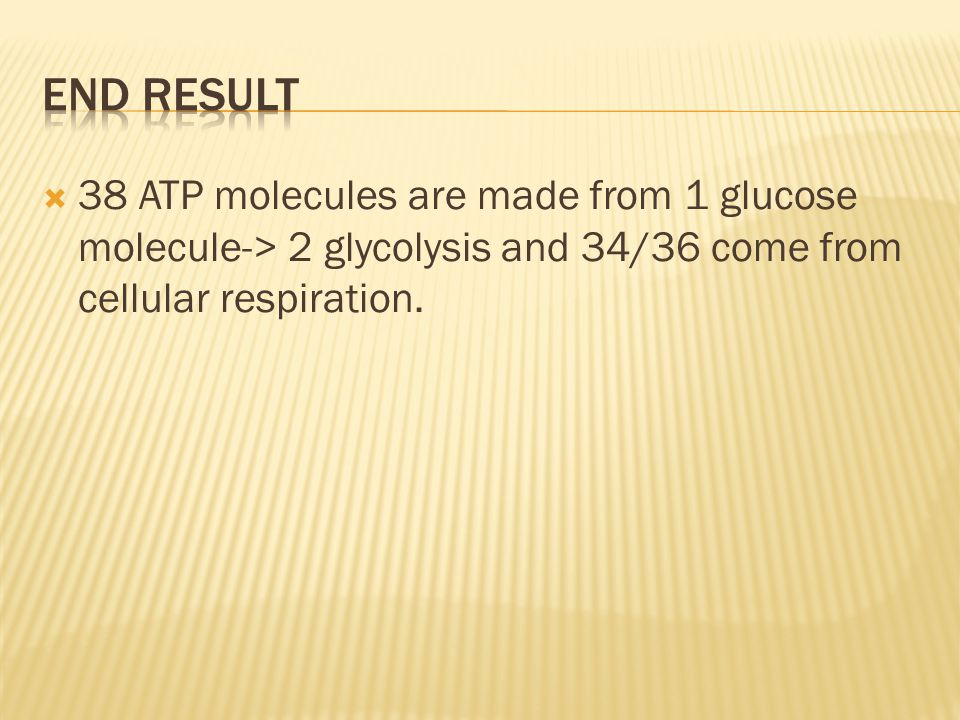 End Result 38 ATP molecules are made from 1 glucose molecule-> 2 glycolysis and 34/36 come from cellular respiration.