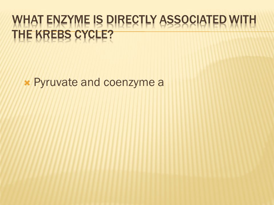 What enzyme is directly associated with the Krebs Cycle