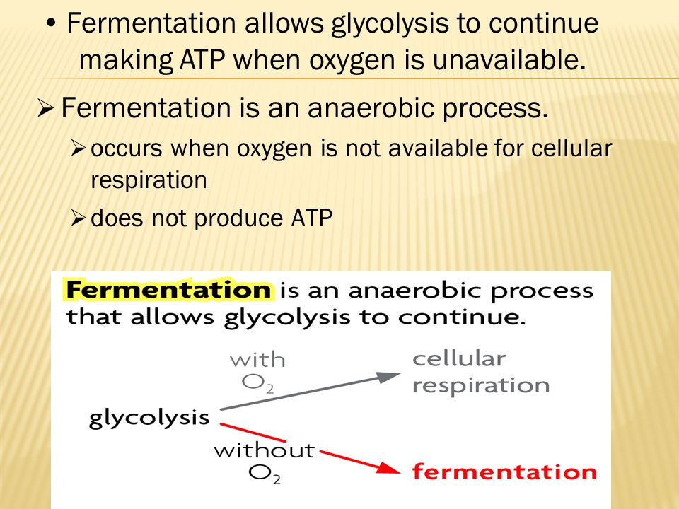 Fermentation is an anaerobic process.
