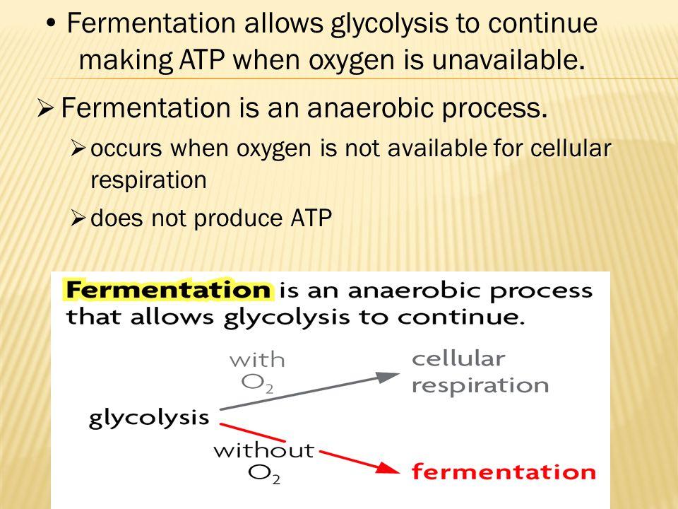 Fermentation is an anaerobic process.