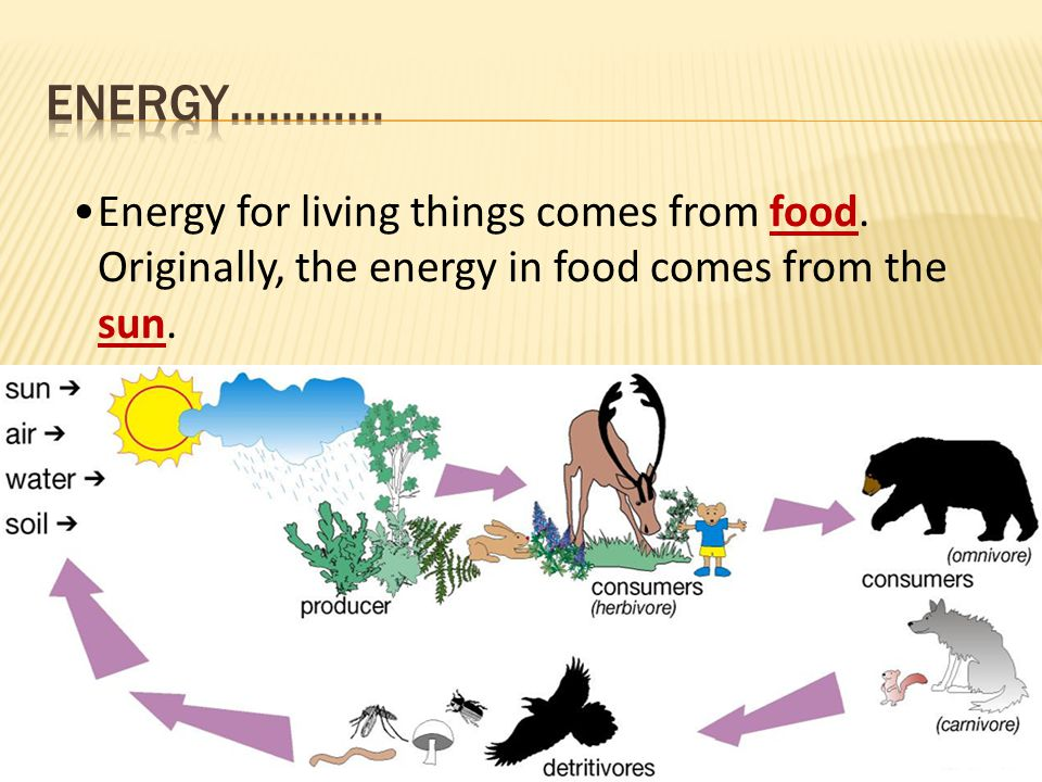 Energy………… Energy for living things comes from food.