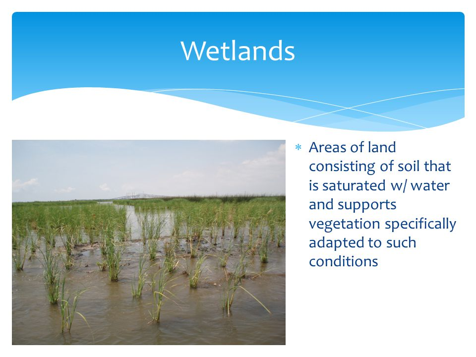 Wetlands Areas of land consisting of soil that is saturated w/ water and supports vegetation specifically adapted to such conditions.