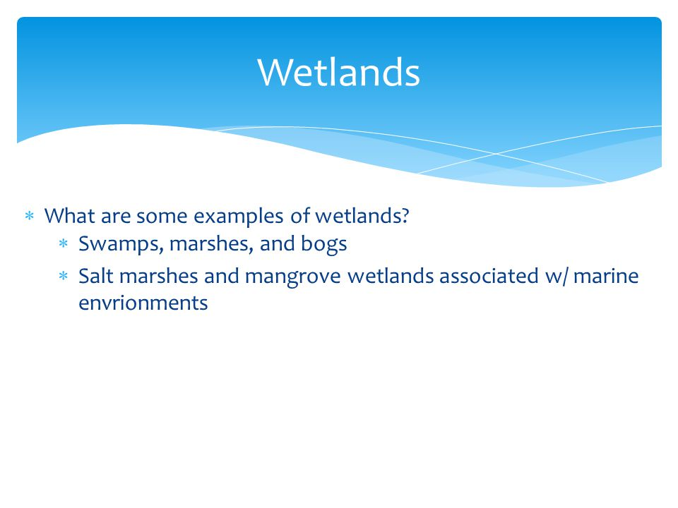 Wetlands What are some examples of wetlands Swamps, marshes, and bogs