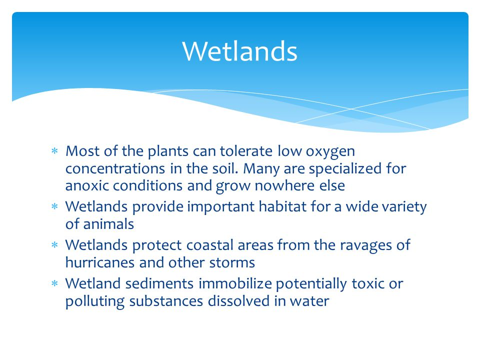 Wetlands Most of the plants can tolerate low oxygen concentrations in the soil. Many are specialized for anoxic conditions and grow nowhere else.