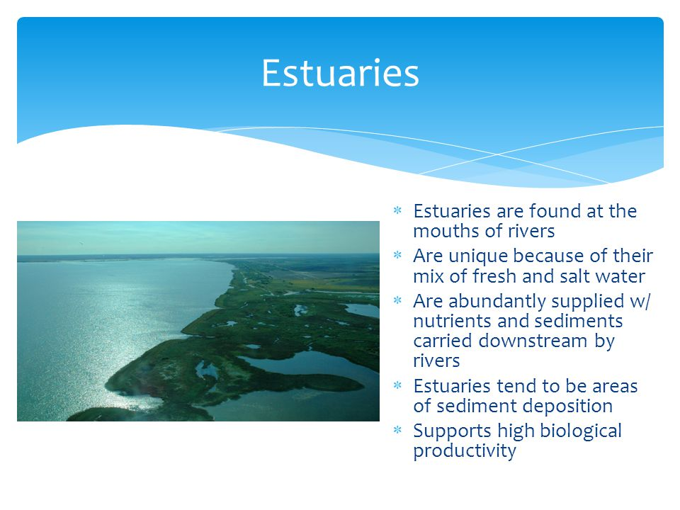 Estuaries Estuaries are found at the mouths of rivers