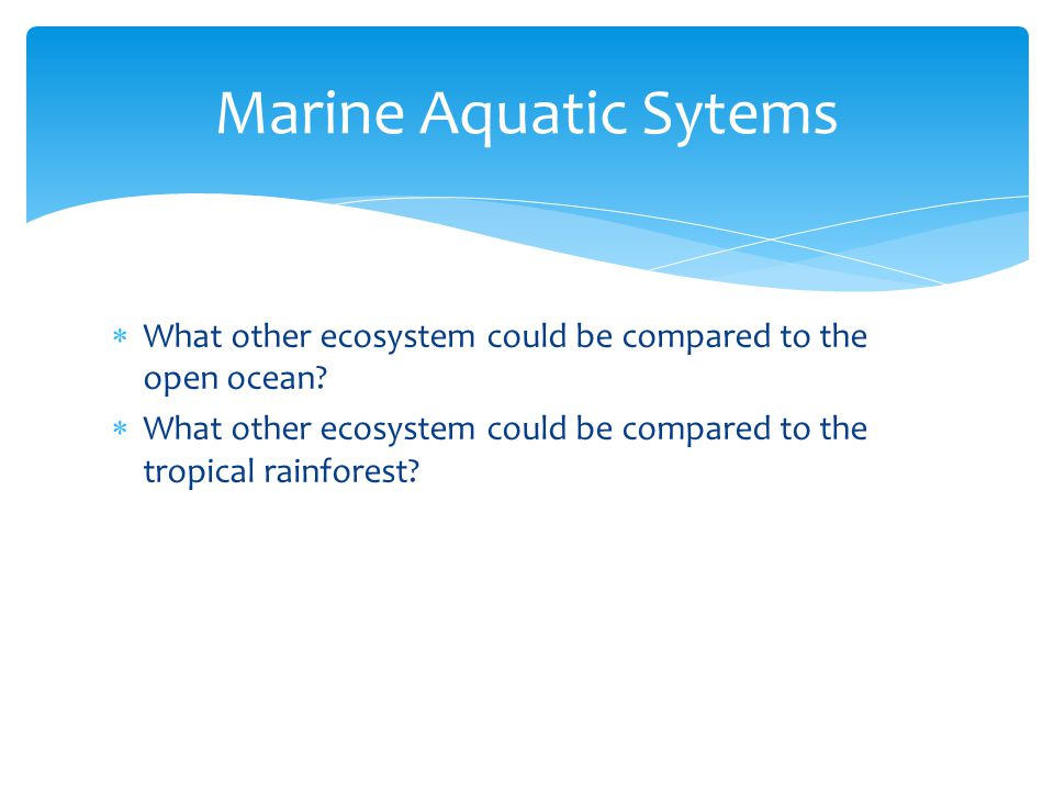 Marine Aquatic Sytems What other ecosystem could be compared to the open ocean.