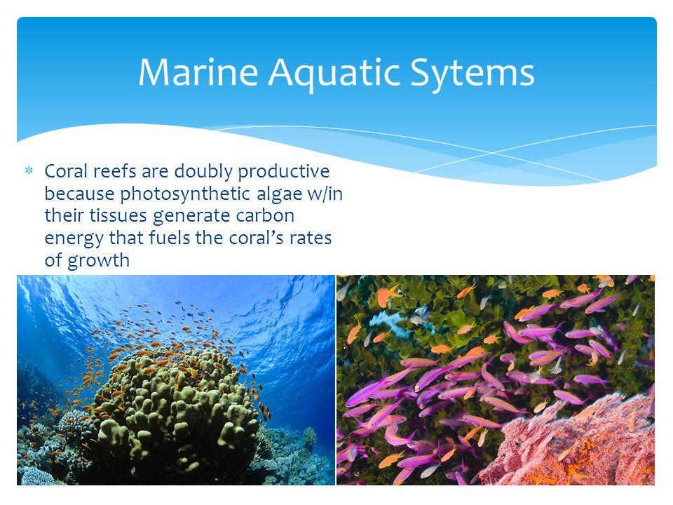 Marine Aquatic Sytems