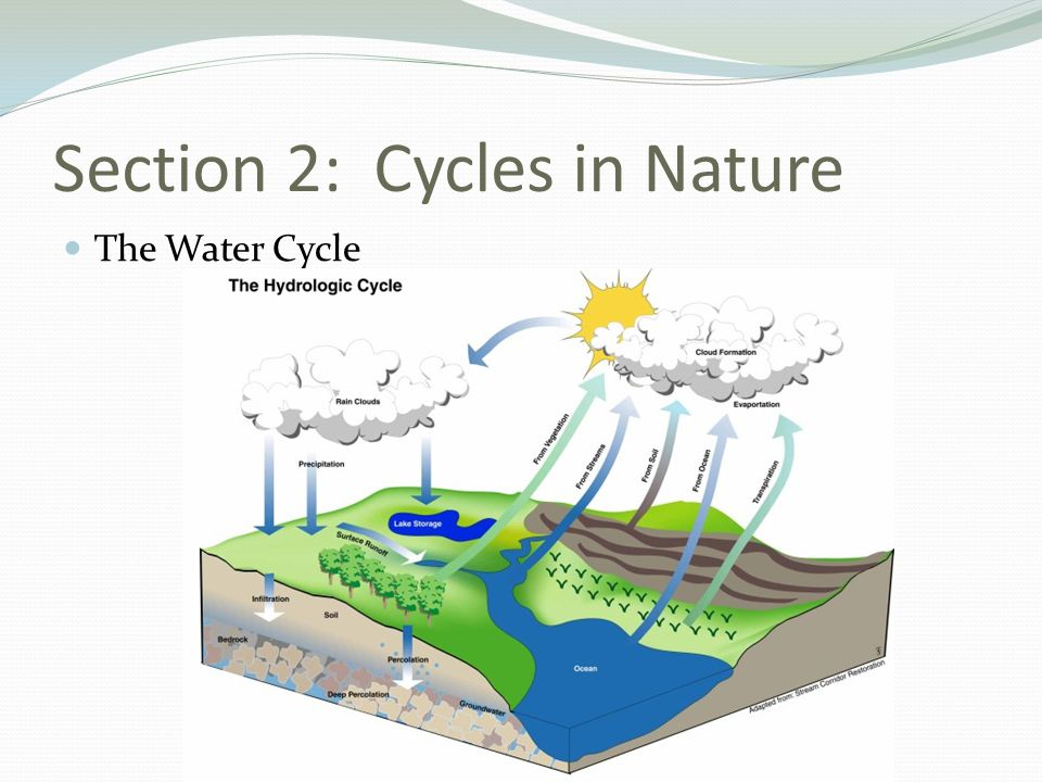 Section 2: Cycles in Nature