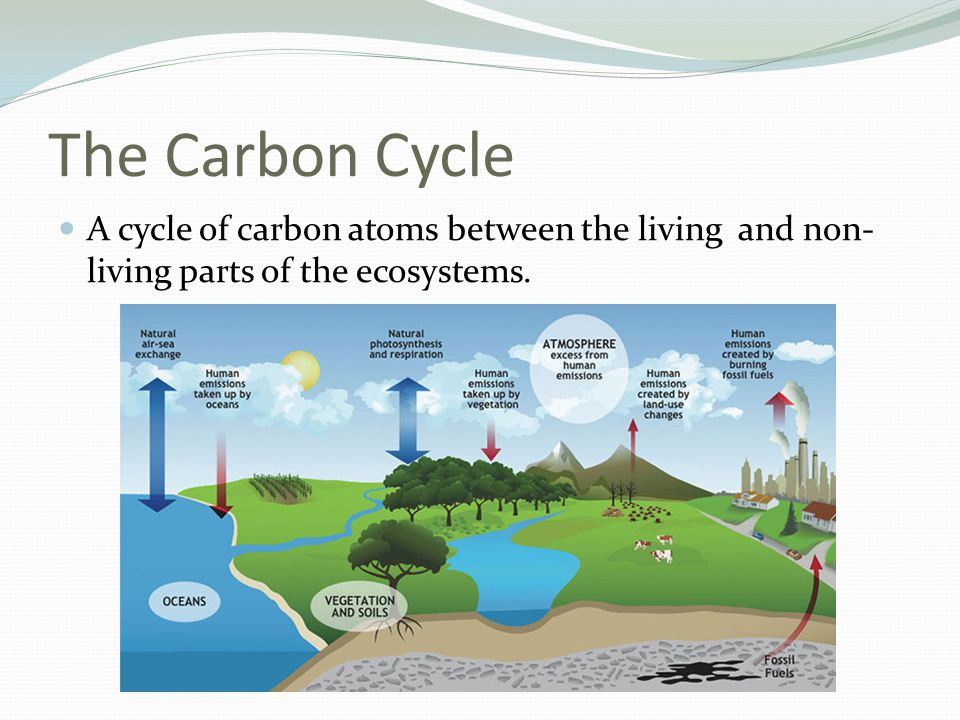 The Carbon Cycle A cycle of carbon atoms between the living and non-living parts of the ecosystems.