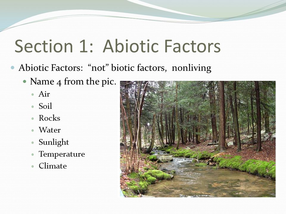 Section 1: Abiotic Factors