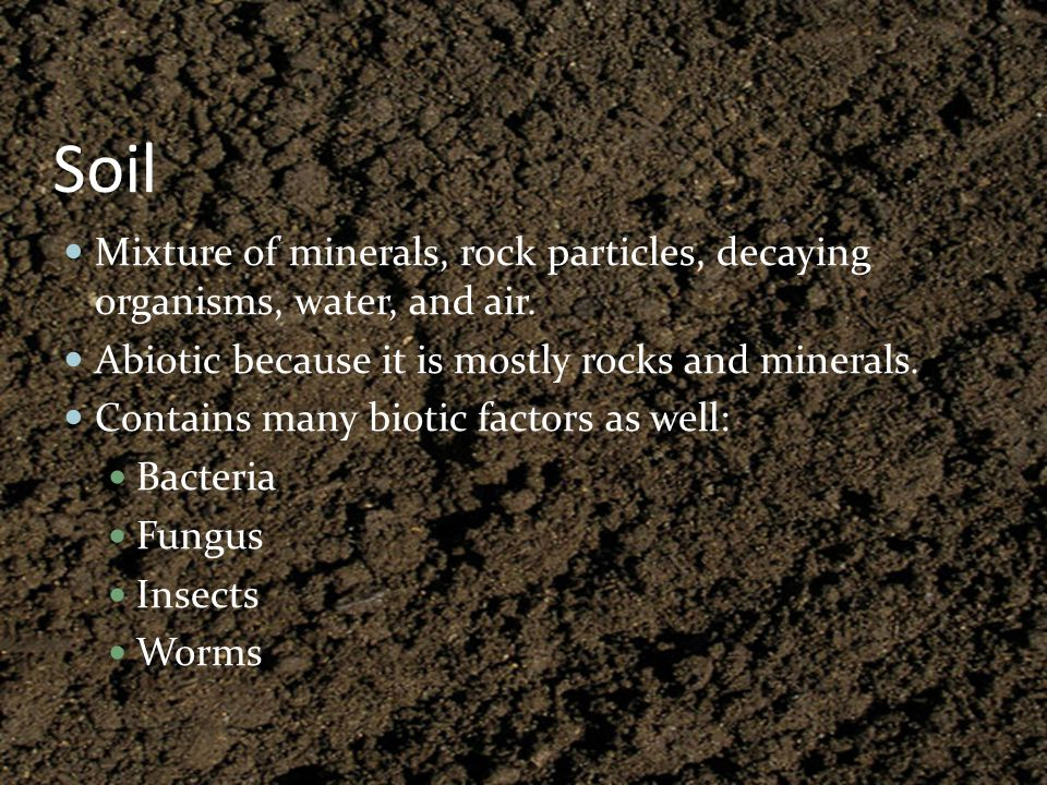 Soil Mixture of minerals, rock particles, decaying organisms, water, and air. Abiotic because it is mostly rocks and minerals.