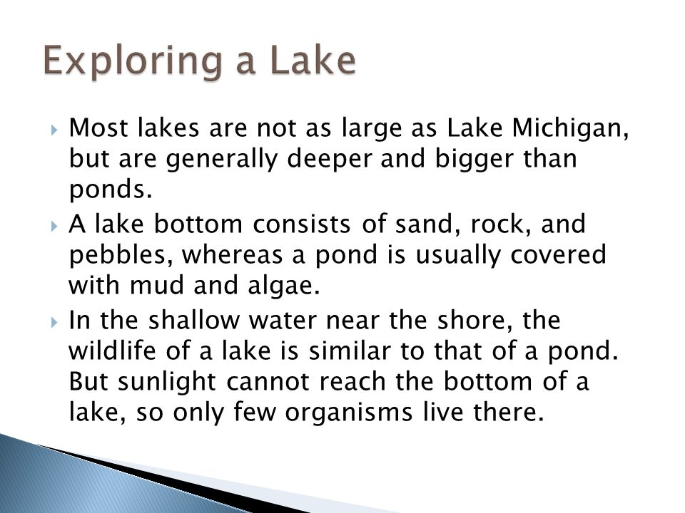 Exploring a Lake Most lakes are not as large as Lake Michigan, but are generally deeper and bigger than ponds.