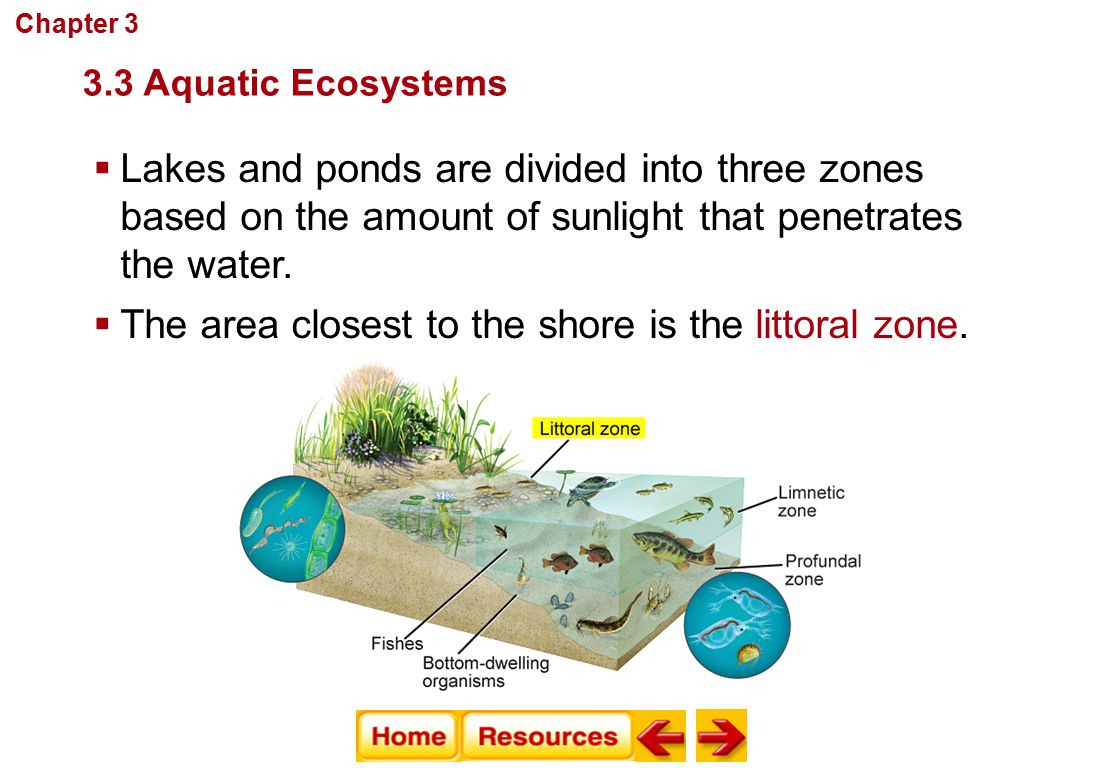 The area closest to the shore is the littoral zone.
