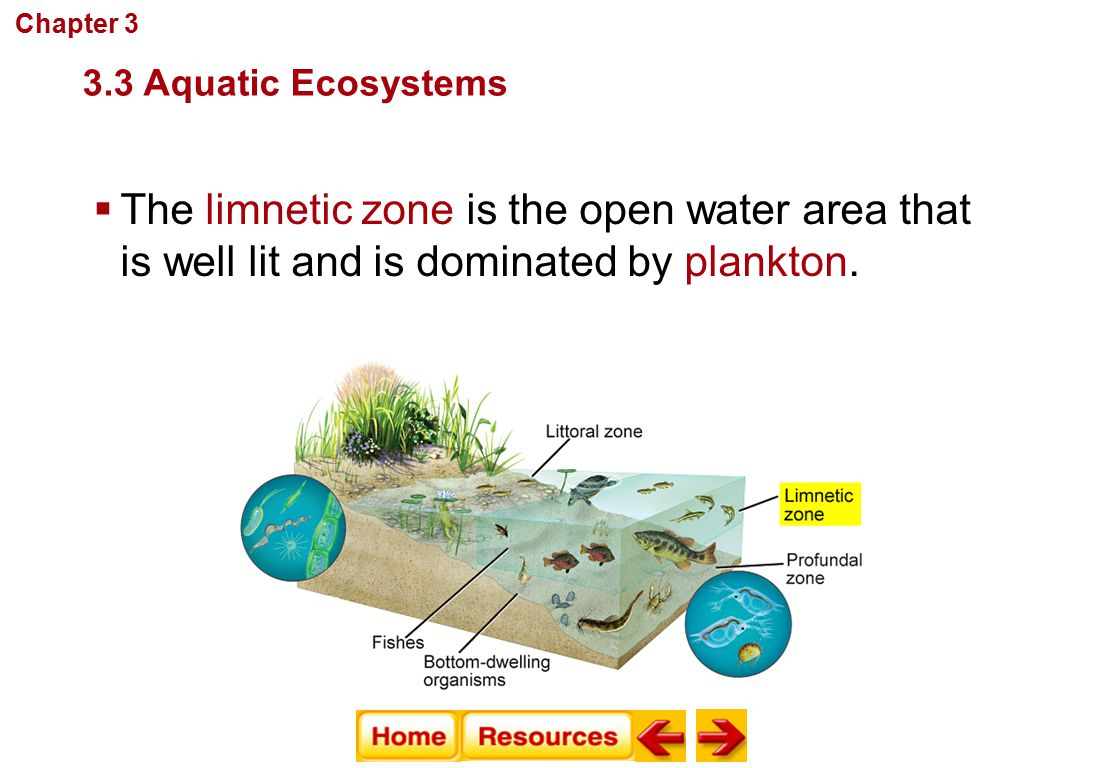 Chapter 3 Communities, Biomes, and Ecosystems. 3.3 Aquatic Ecosystems.