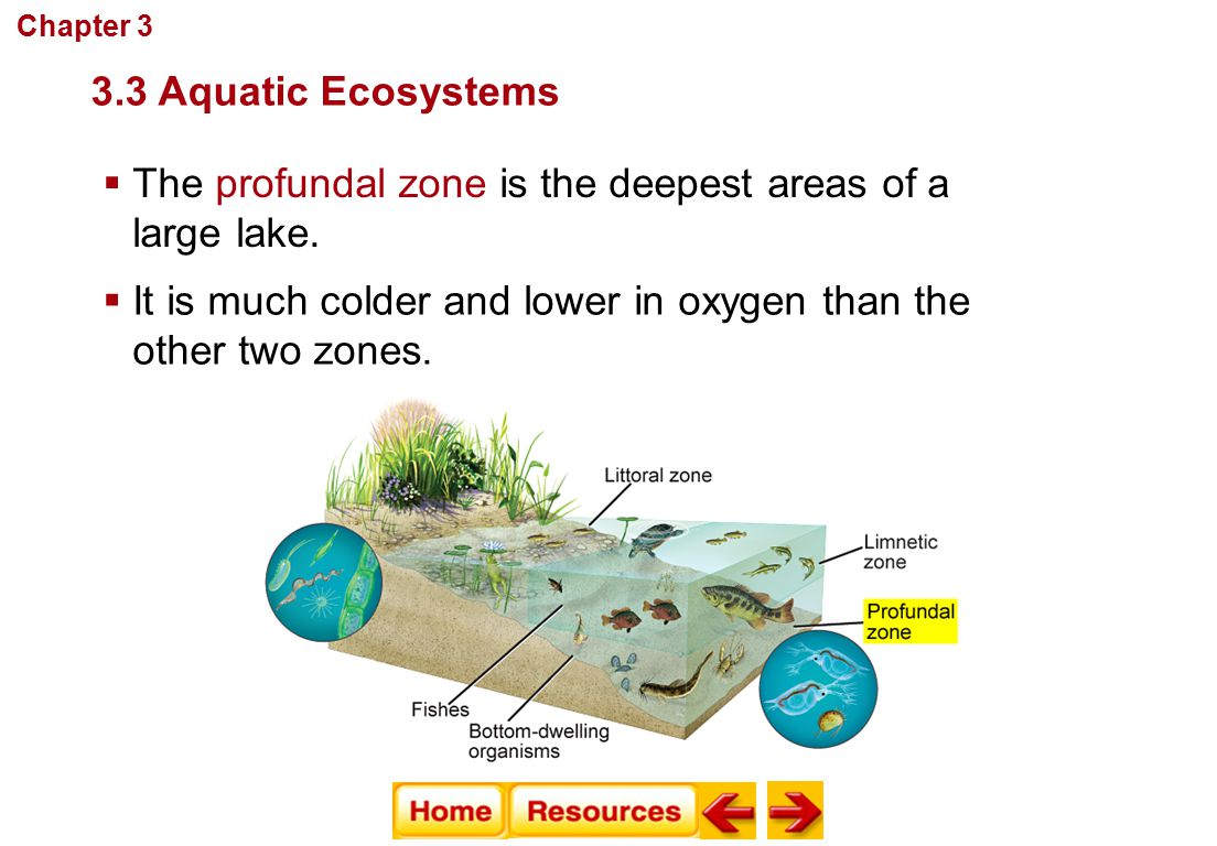 The profundal zone is the deepest areas of a large lake.