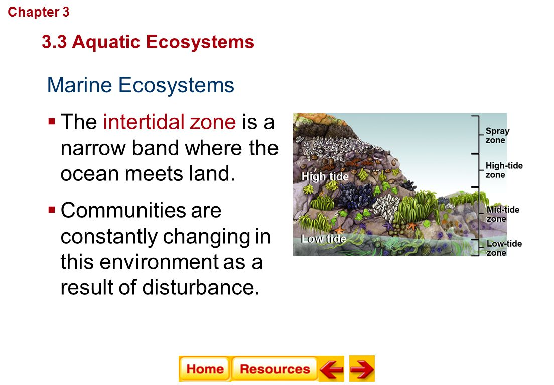 The intertidal zone is a narrow band where the ocean meets land.