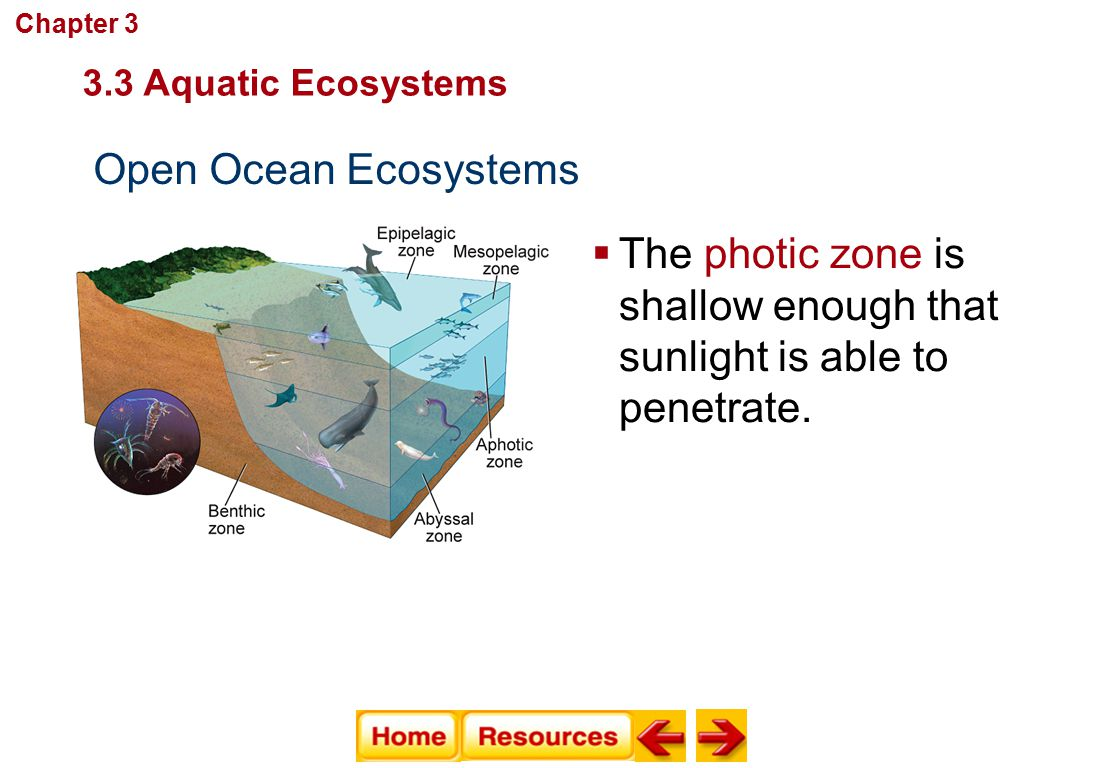 The photic zone is shallow enough that sunlight is able to penetrate.