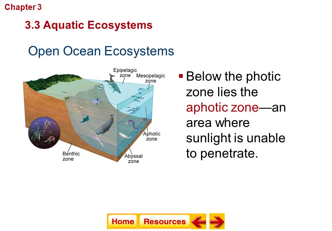Chapter 3 Communities, Biomes, and Ecosystems. 3.3 Aquatic Ecosystems. Open Ocean Ecosystems.
