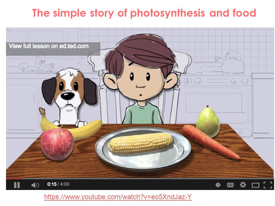 The simple story of photosynthesis and food
