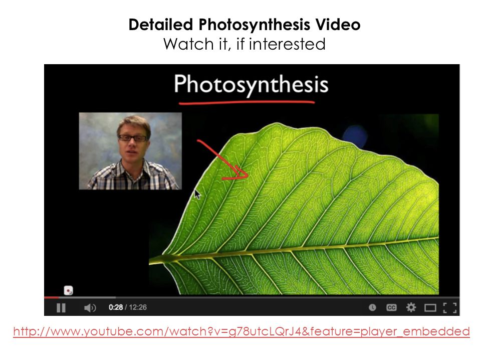 Detailed Photosynthesis Video