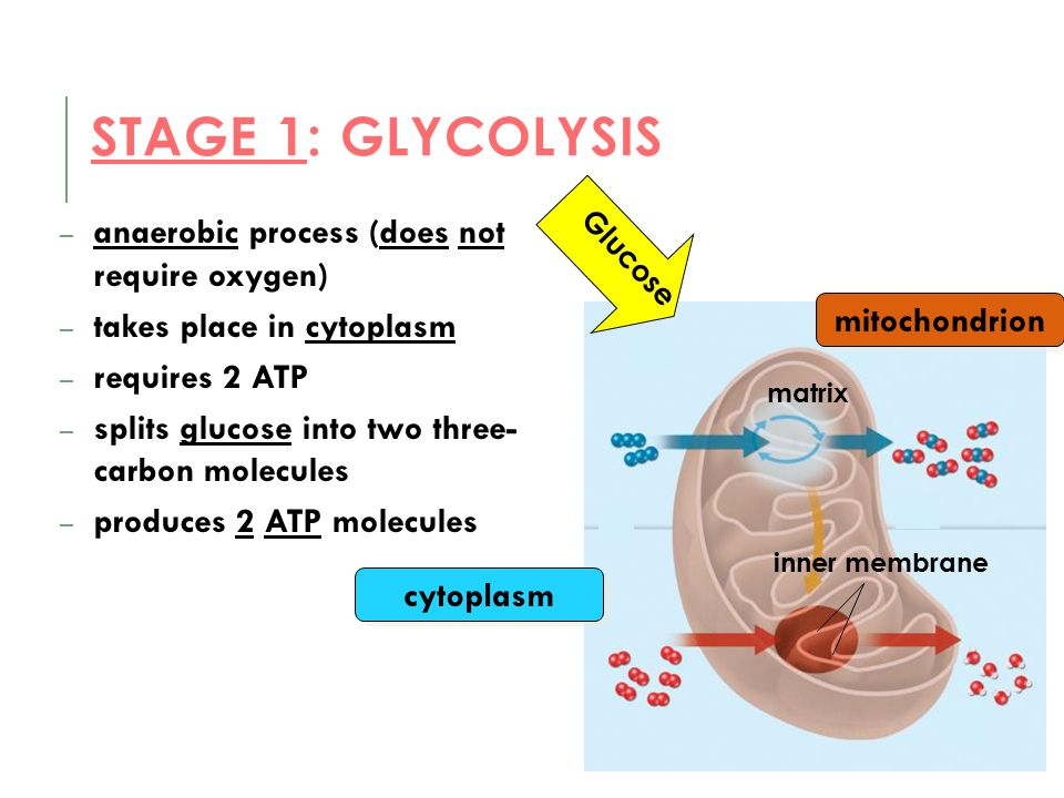 Stage 1: Glycolysis anaerobic process (does not require oxygen)