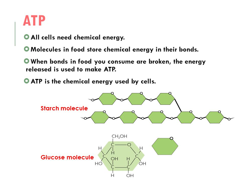 ATP All cells need chemical energy.