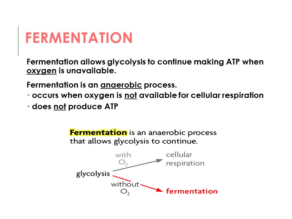 Fermentation Fermentation allows glycolysis to continue making ATP when oxygen is unavailable. Fermentation is an anaerobic process.