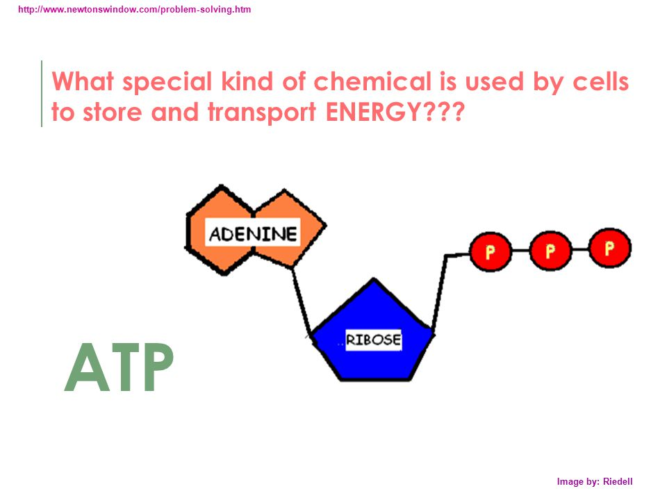 http://www.newtonswindow.com/problem-solving.htm What special kind of chemical is used by cells to store and transport ENERGY