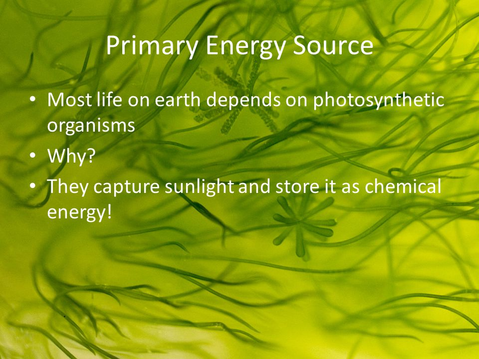 Primary Energy Source Most life on earth depends on photosynthetic organisms.