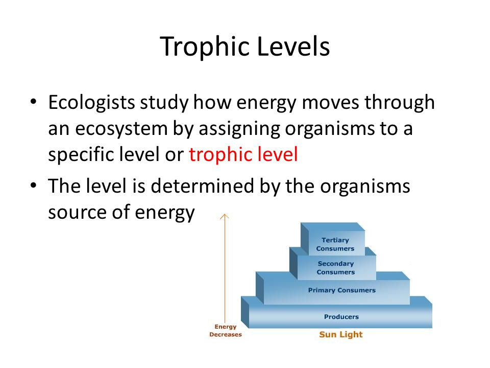 Trophic Levels Ecologists study how energy moves through an ecosystem by assigning organisms to a specific level or trophic level.