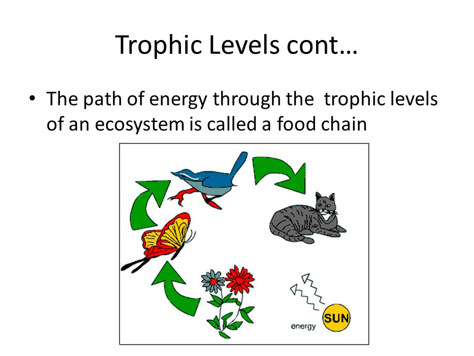 Trophic Levels cont… The path of energy through the trophic levels of an ecosystem is called a food chain.