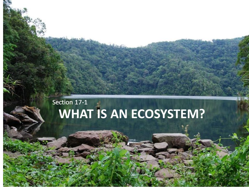Section 17-1 What is an ecosystem
